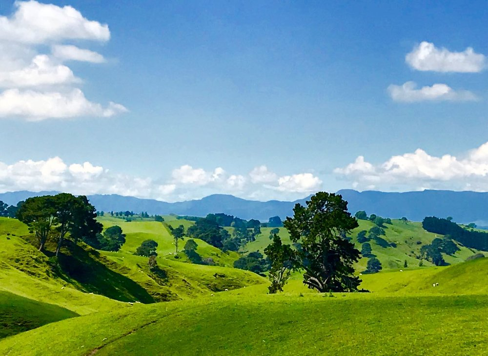 The sweeping pastoral pastures of Alexander Farm in Matamata, NZ filled our souls with serenity and calm unlike anything we've ever seen.