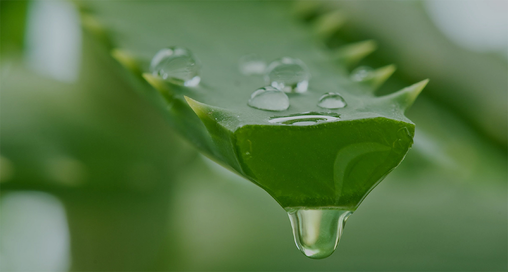 Nopavera Plus: Aloe Vera Provides Antioxidants and Reduces Inflammation.
