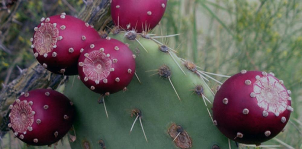 Nopal Cactus Fruit - Anti-Oxidative, Anti-Inflammatory, Amazing Taste