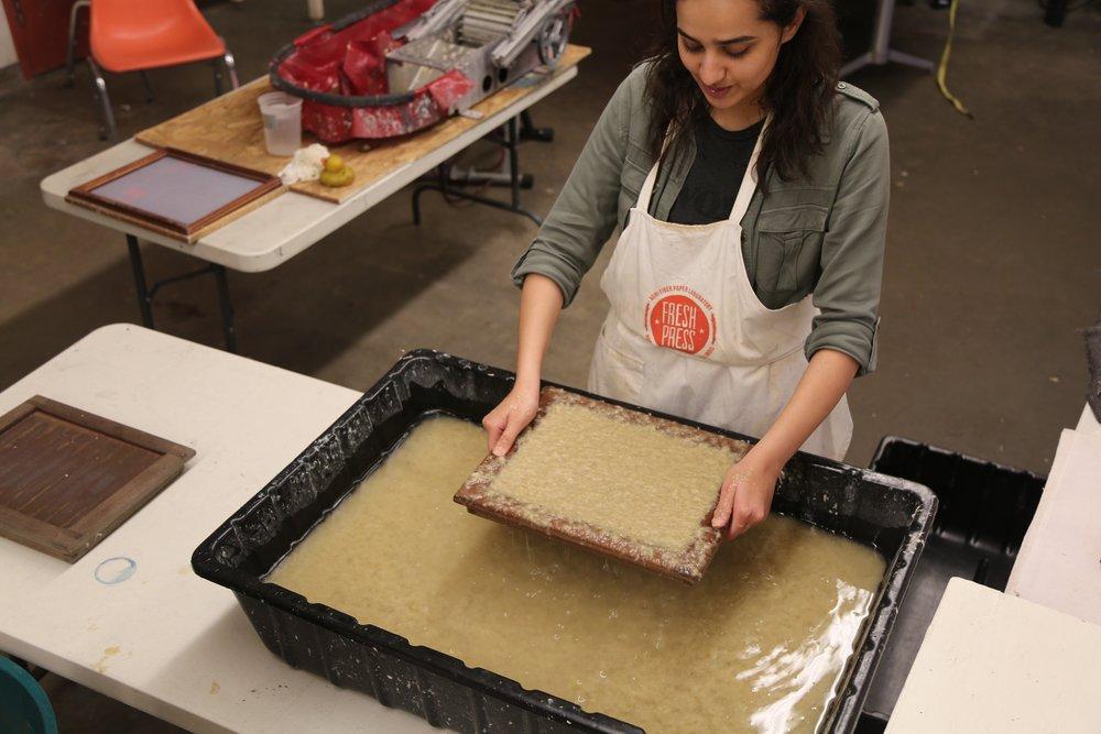 Maryam pulling a miscanthus sheet!