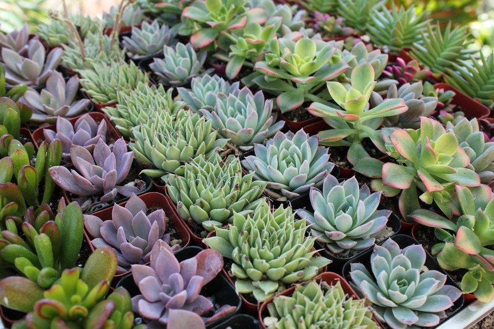 Family Tree Nursery   photo credit//  @family_tree_nursery   OVERLAND PARK, KANSAS