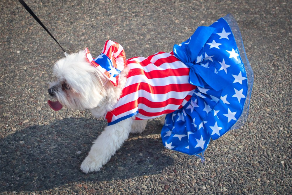 dog_parade2.jpg