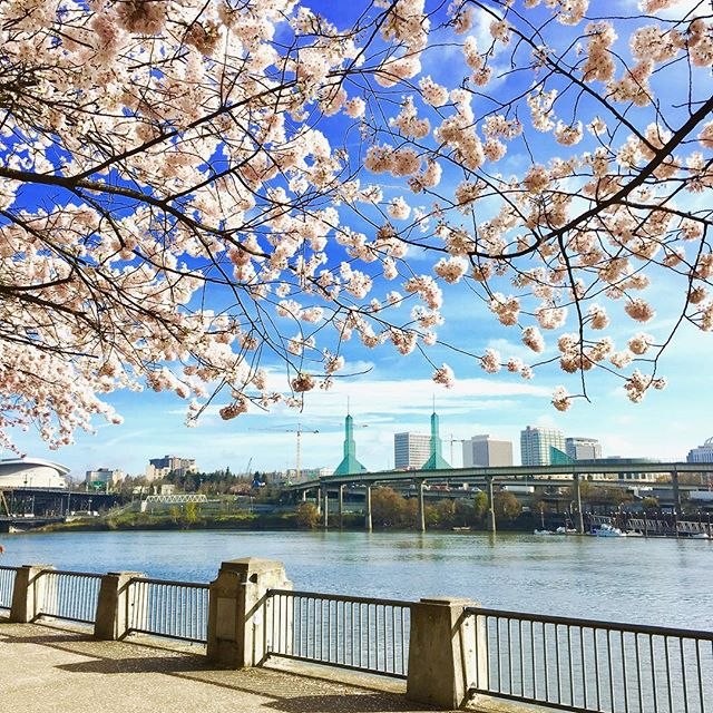 We love #PacificNorthWest! We live #Organic and #Natural. And that inspired us to use all natural and organic ingredients for @farmspiritbeauty. Check it out on Amazon! #CherryBlossom #Portland