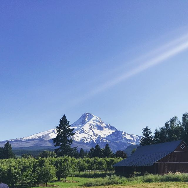 #MtHood is in our backyard! And the hood river valley inspired all the #natural ingredients in our #skincare formulation. #naturalbeauty #mothernature #farmfresh #farmspiritbeauty #orchard #wokeuplikethis