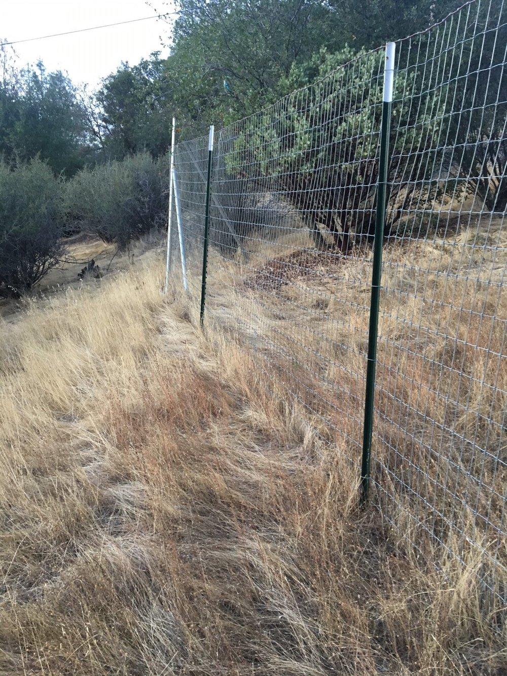 RG raw fence line2.jpg