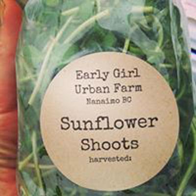 Sunflower-Shoots-(2).jpg
