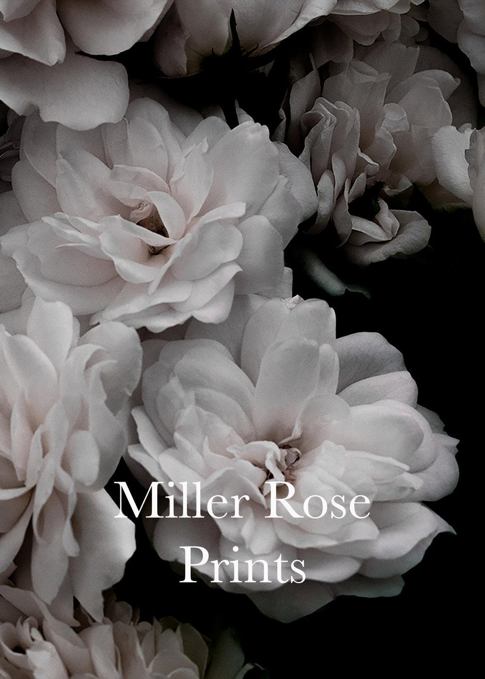 Bed of Roses-2a copy-2 copy.jpg