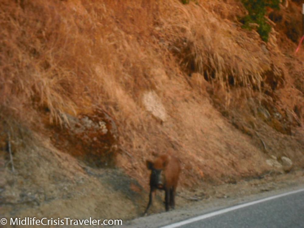Sequoia-194.jpg