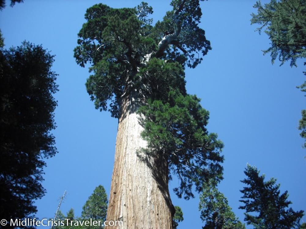 Sequoia-25.jpg