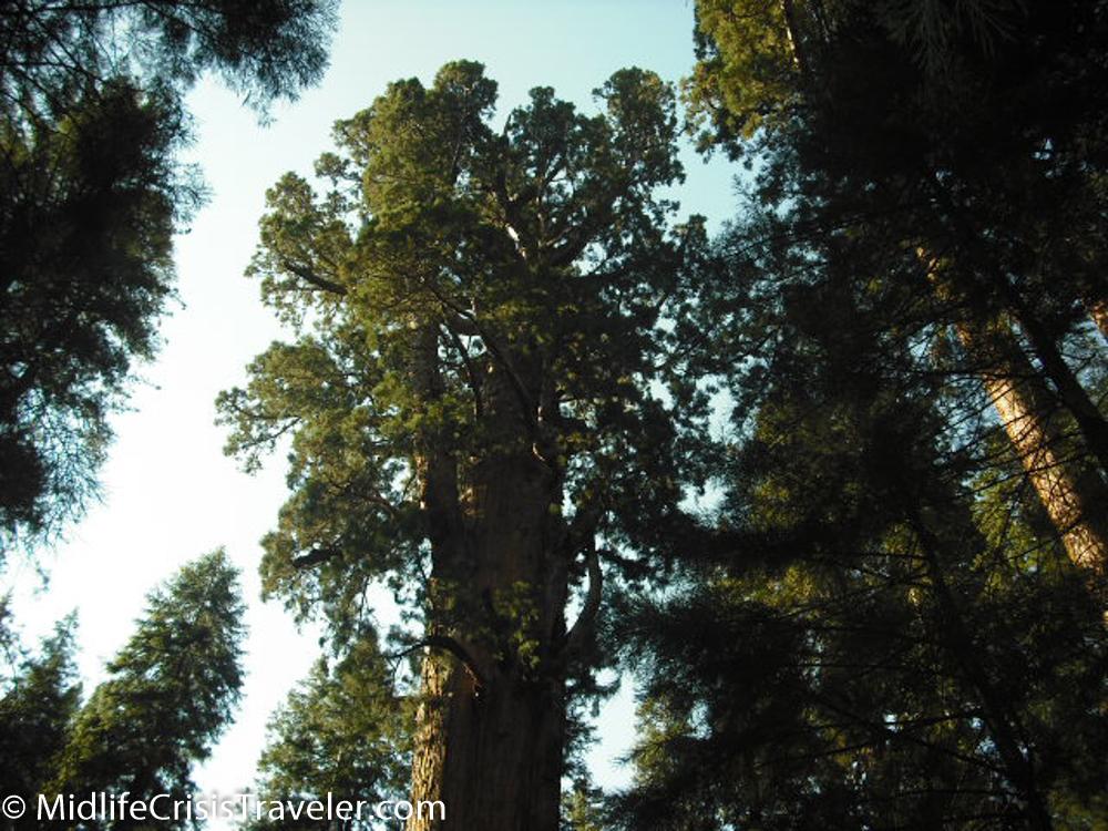 Sequoia-39.jpg