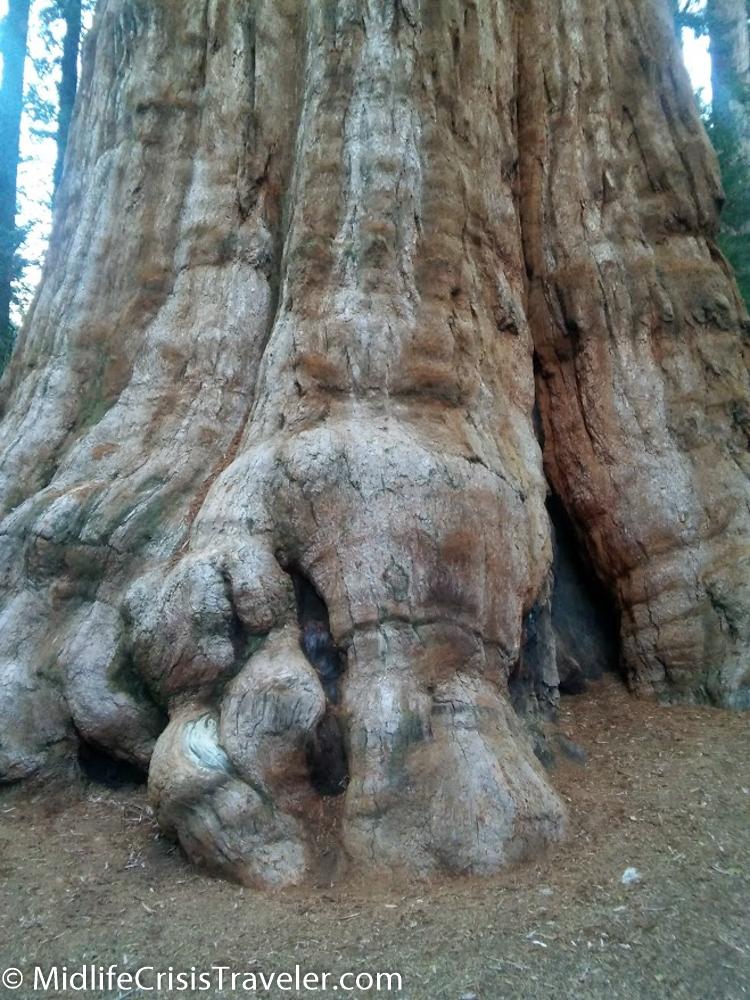 Sequoia-37.jpg