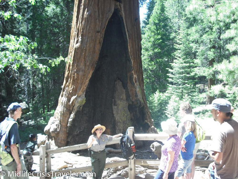 Sequoia-23.jpg