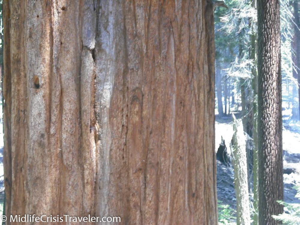 Sequoia-19.jpg