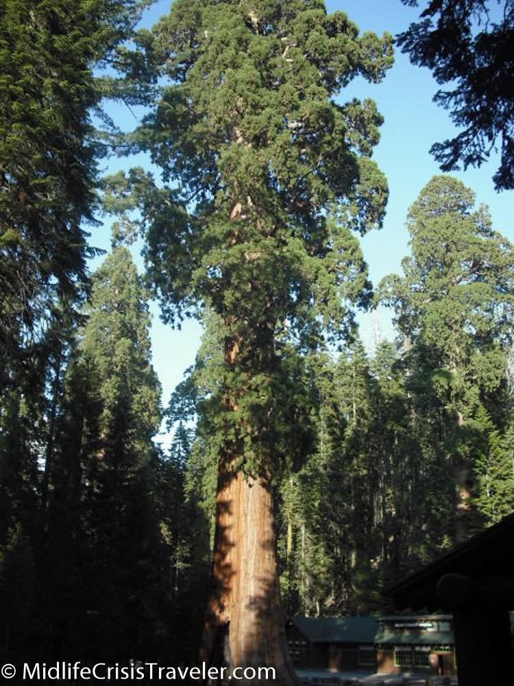 Sequoia-45.jpg