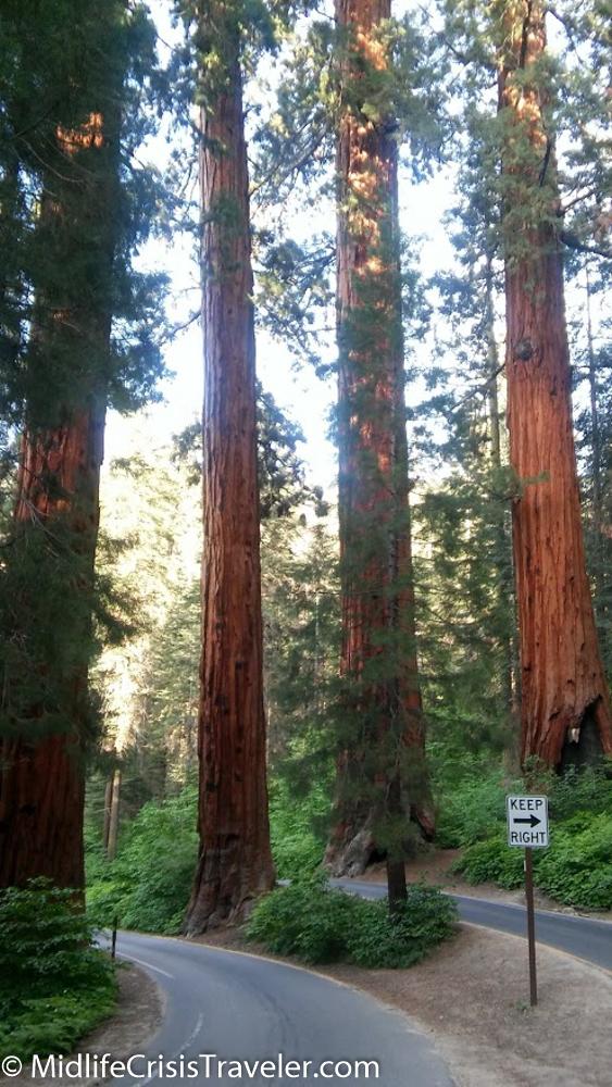 Sequoia-50.jpg