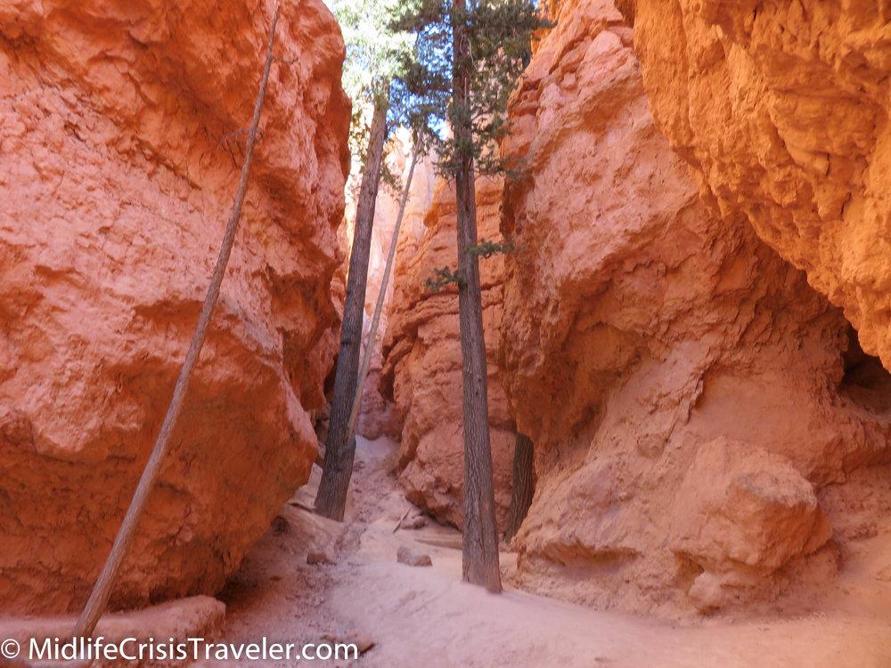 Bryce Canyon NP Navajo Loop-37.jpg