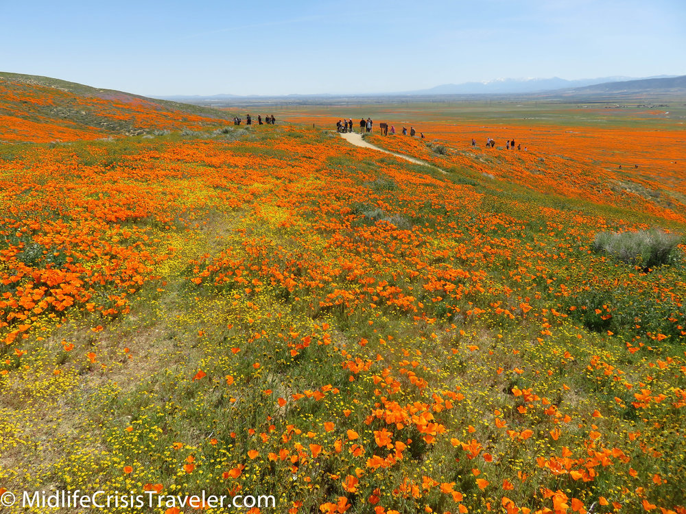 2019 Super Bloom-98.jpg