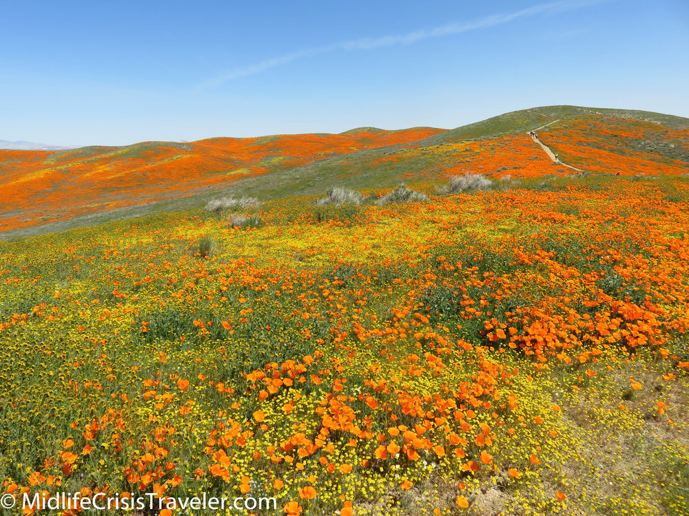 2019 Super Bloom-97.jpg