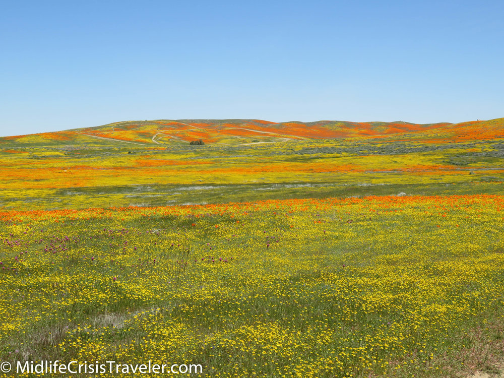 2019 Super Bloom-75.jpg