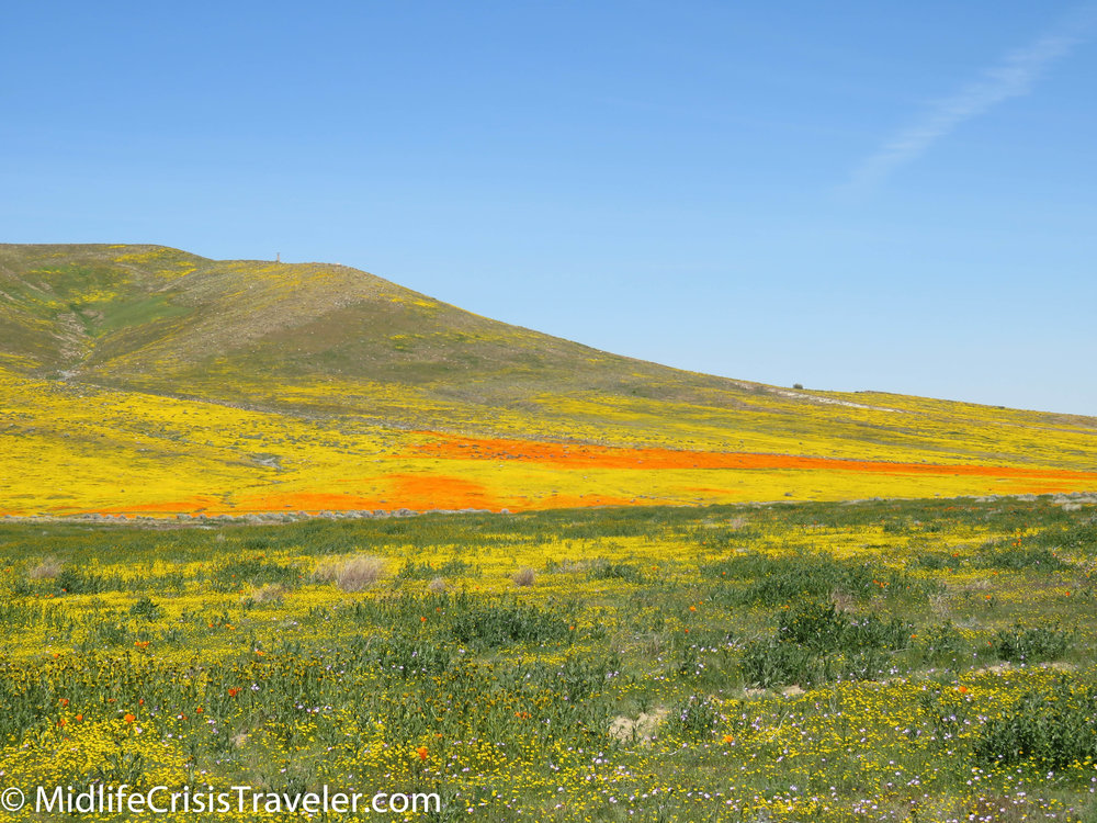 2019 Super Bloom-65.jpg