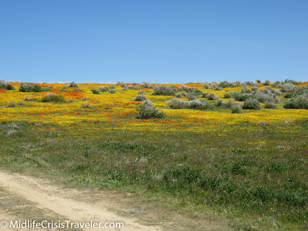 2019 Super Bloom-49.jpg