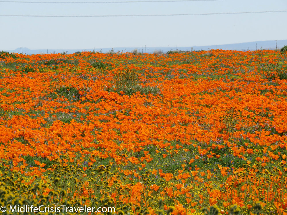 2019 Super Bloom-25.jpg