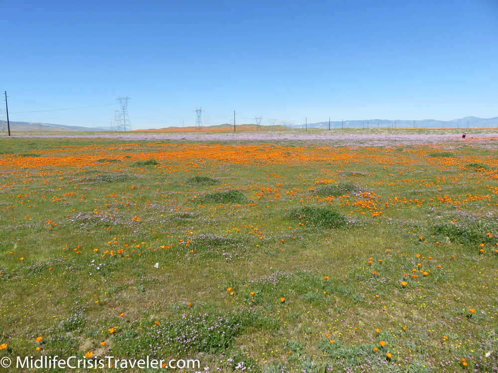 2019 Super Bloom-19.jpg