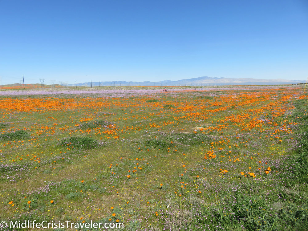 2019 Super Bloom-18.jpg