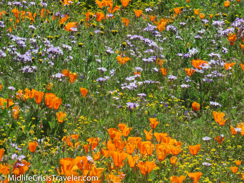 2019 Super Bloom-16.jpg