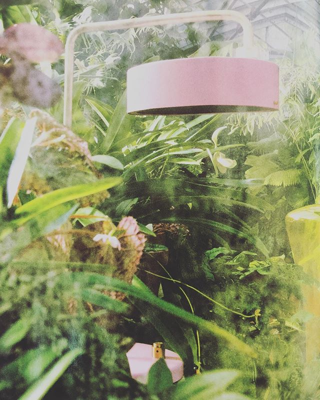 Flora essence in this months @vogueliving 🌿🌿🌿 . #inspiration #tropical #lighting #greenhouse #friday #theweekend #vogue #australia #greenhues