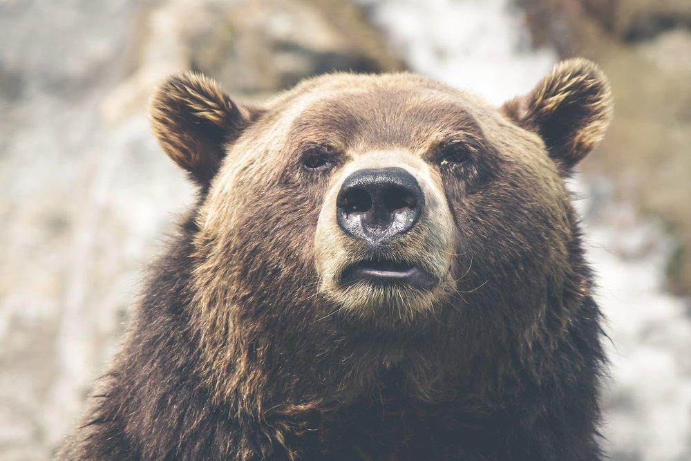 - wildlife sightings