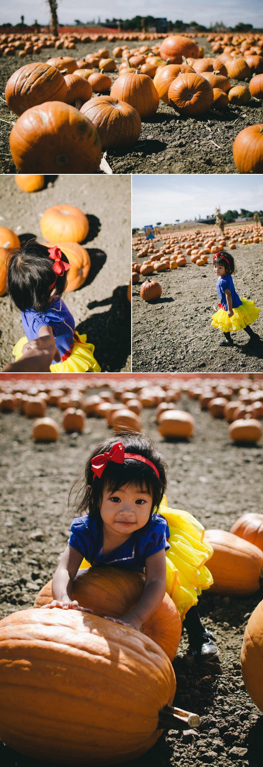 lily-pumpkin-patch-2016-1