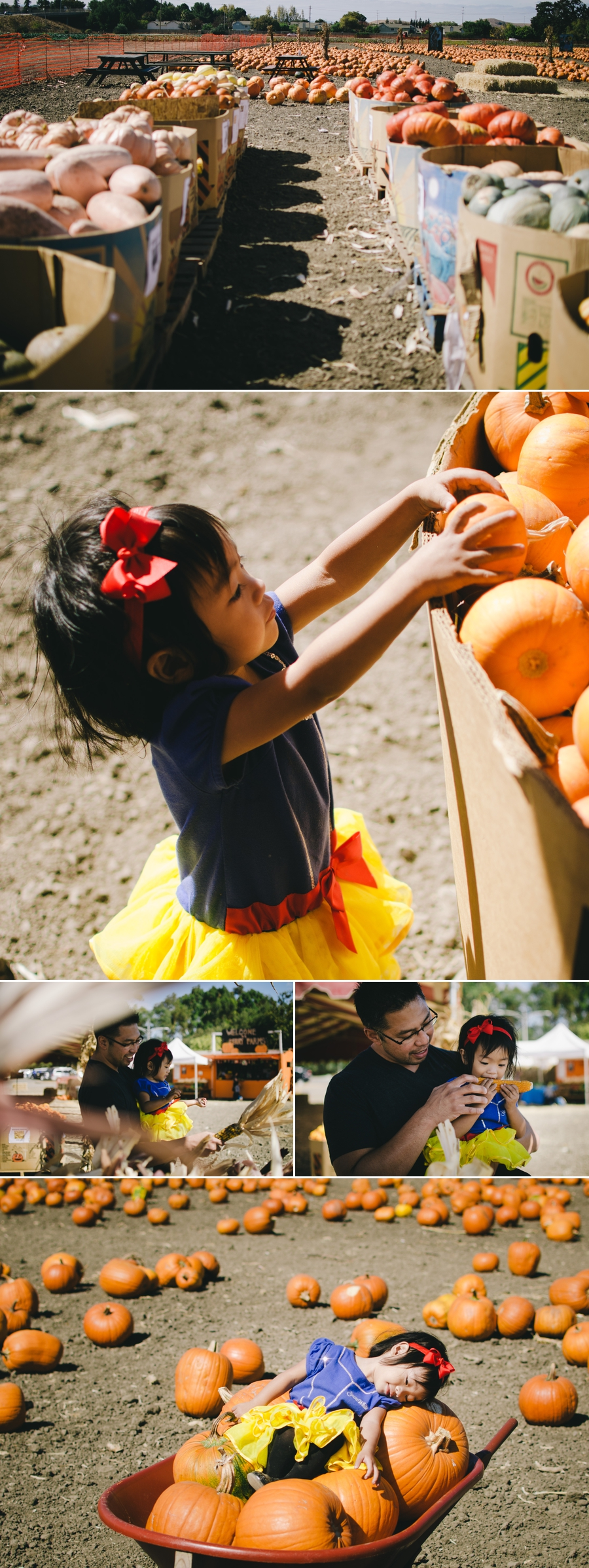 lily-pumpkin-patch-2016-3