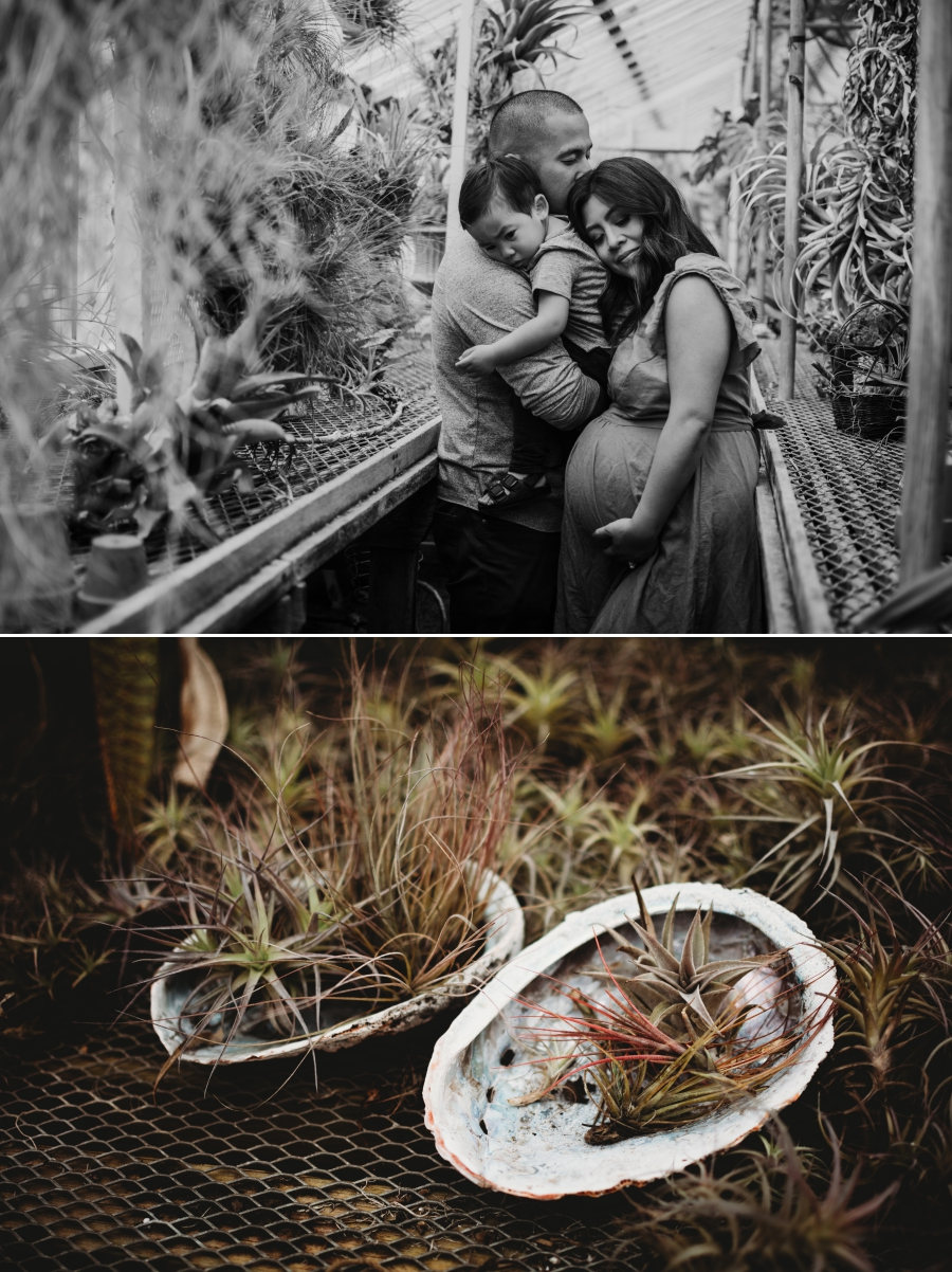 Bay Area Family Maternity Photographer Shelldance Gardens 33