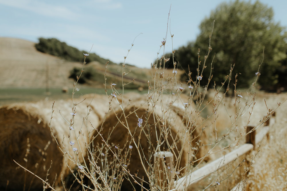 davidmaire_delphinepa_toscane_destinationwedding-1.jpg