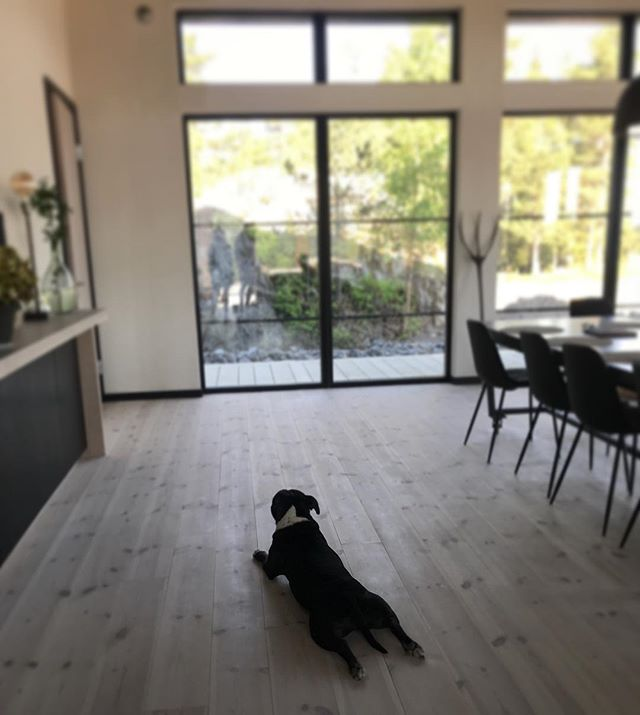 Even dogs enjoy the design  Design - @johanisraelson  Photo - @hapchitsut . . . #interior #interiordesign #architecture #architectureporn #architect #home #interiorinspiration #interiors #homedecor #interiordesigner #homedesign #designlife #details #photooftheday #sunshine