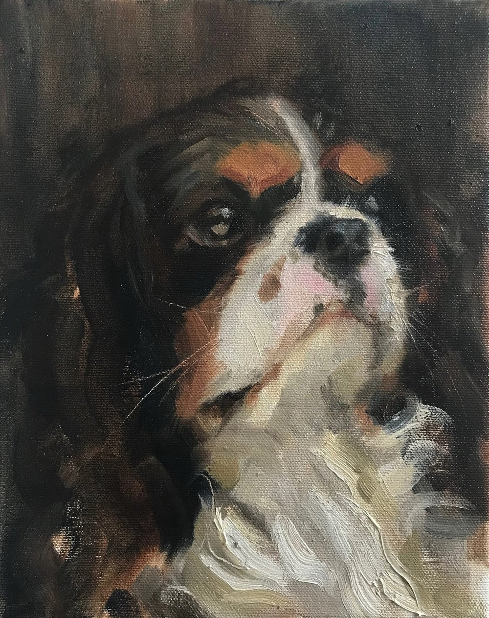 Pet_Portrait_Freddi_.jpg