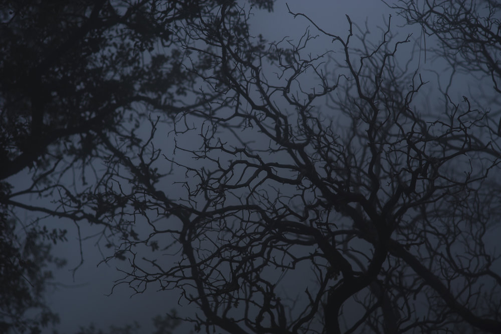Branches reaching though the fog and grabbing nothing.