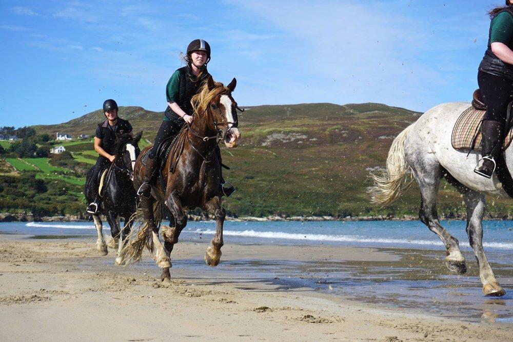 Horses on Killahoey.JPG