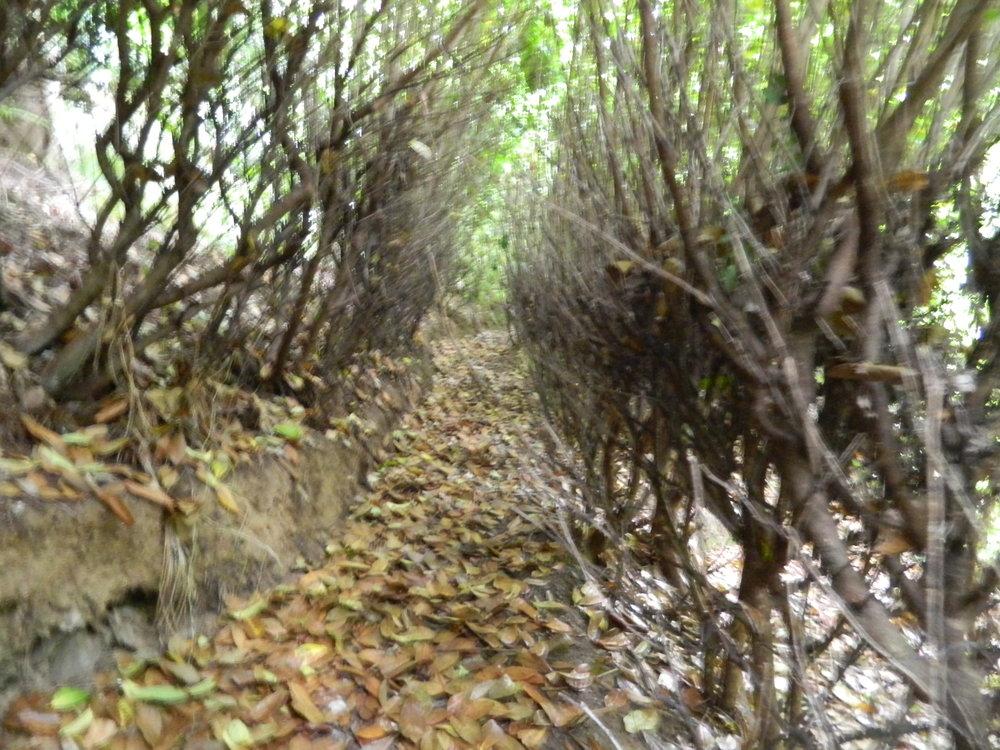 The Crag - garden narrow pathway with beech.jpg