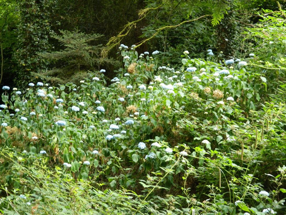 The Crag - bog garden.jpg