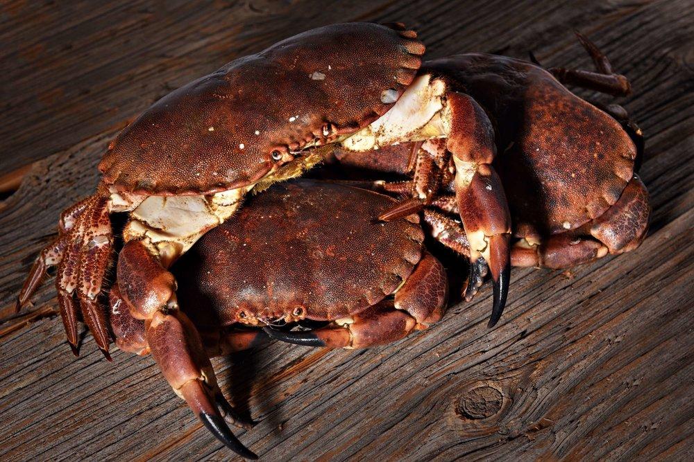 1 dome sur mer seafood schaal schelp kreeft restaurant bistro antwerpen frederic chabbert michelinstar bart albrecht tablefever.jpg