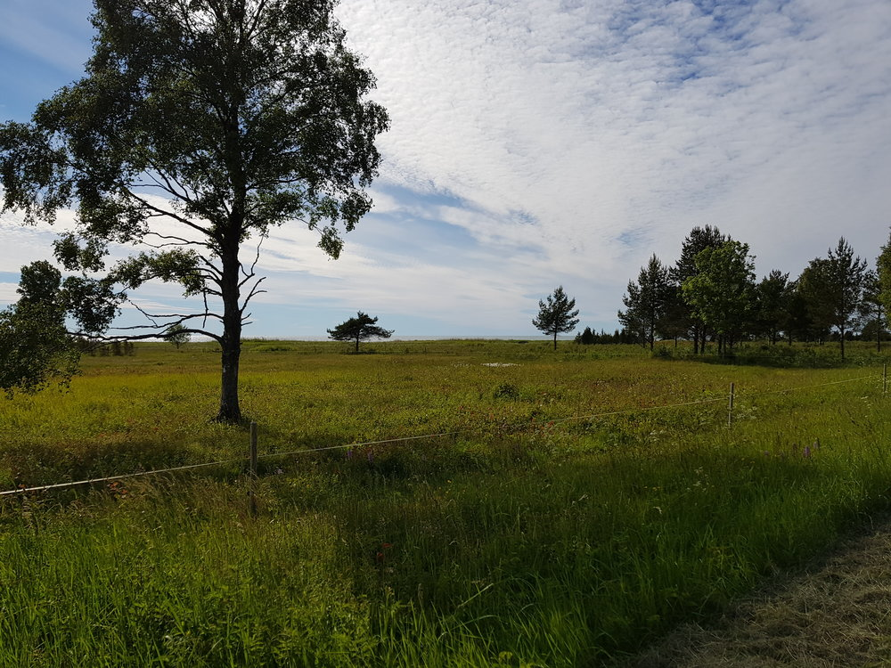 Pastures and the ocean, two common sights on our trip