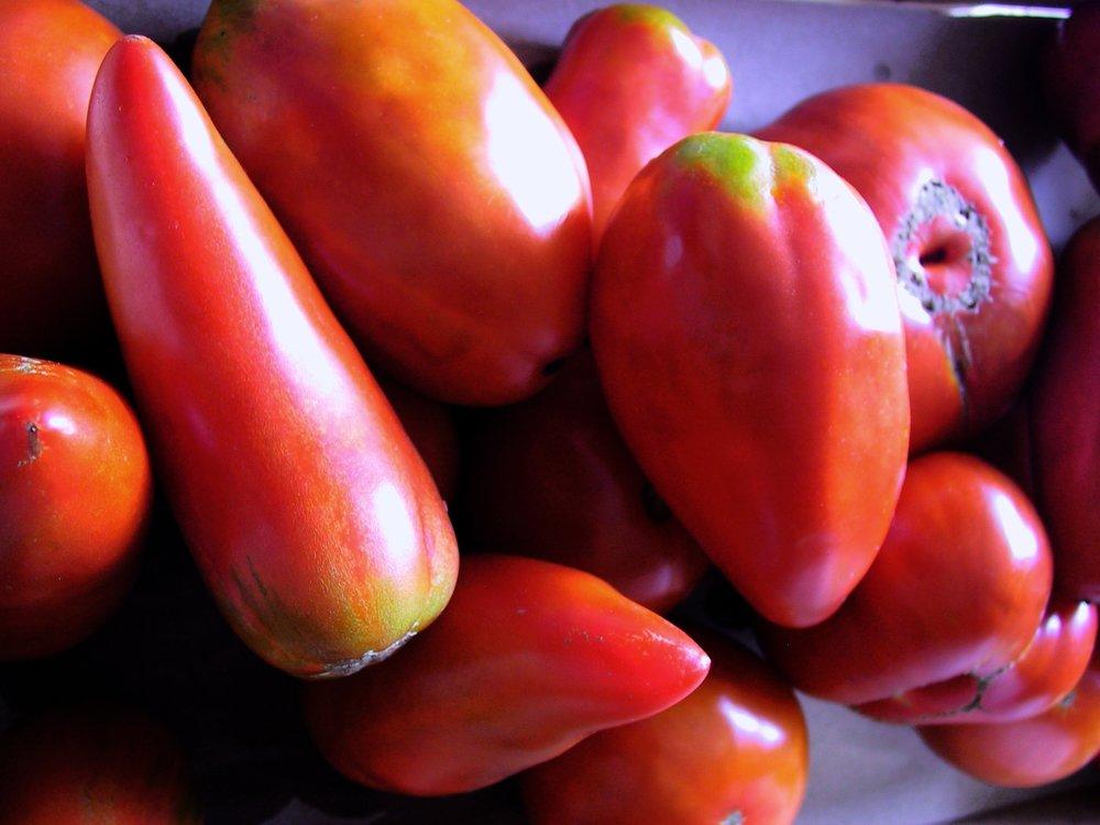 tomates copy.jpg