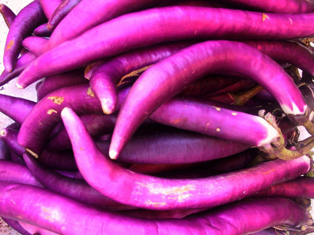 aubergine 2.jpg