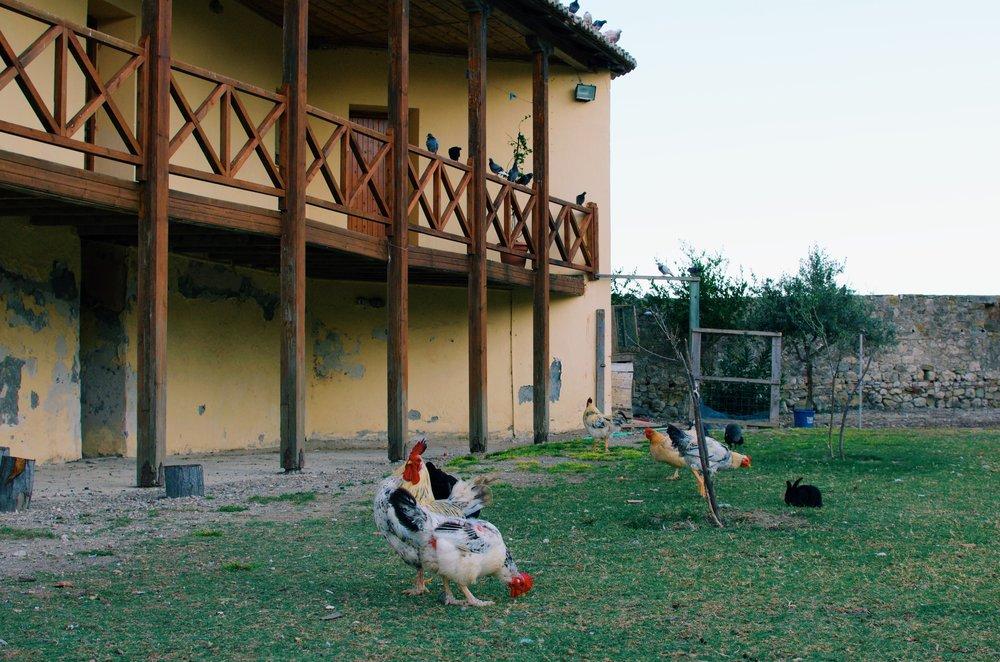 On the Zvërnec Islands, Albania