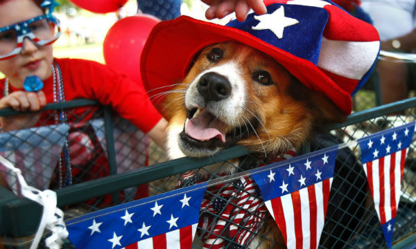 fourth-of-july-dog-new-600x360.jpg