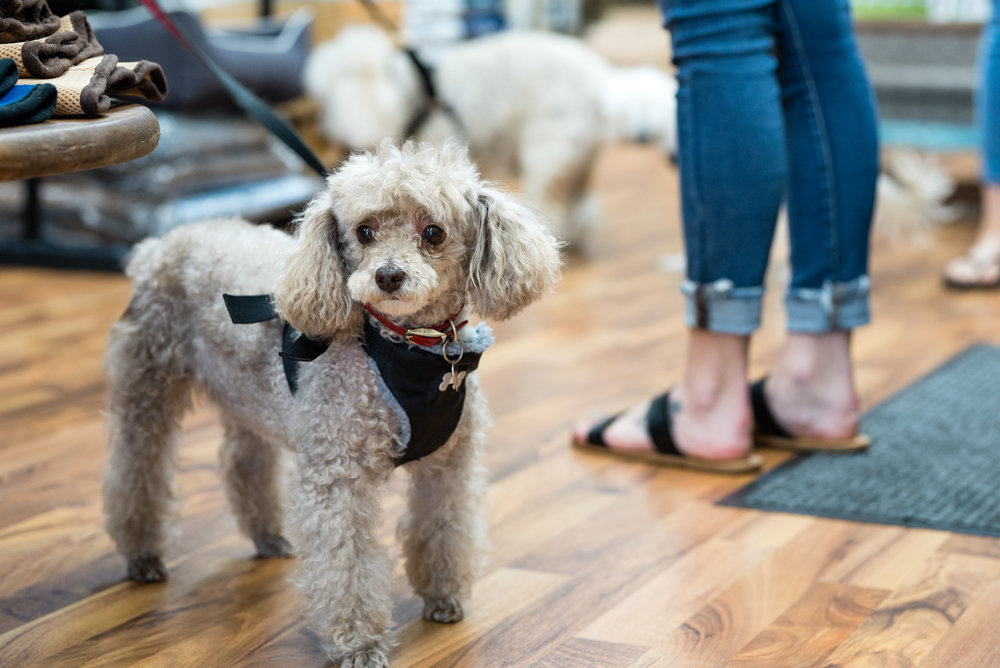 Brittany - Premium Pets-4.jpg