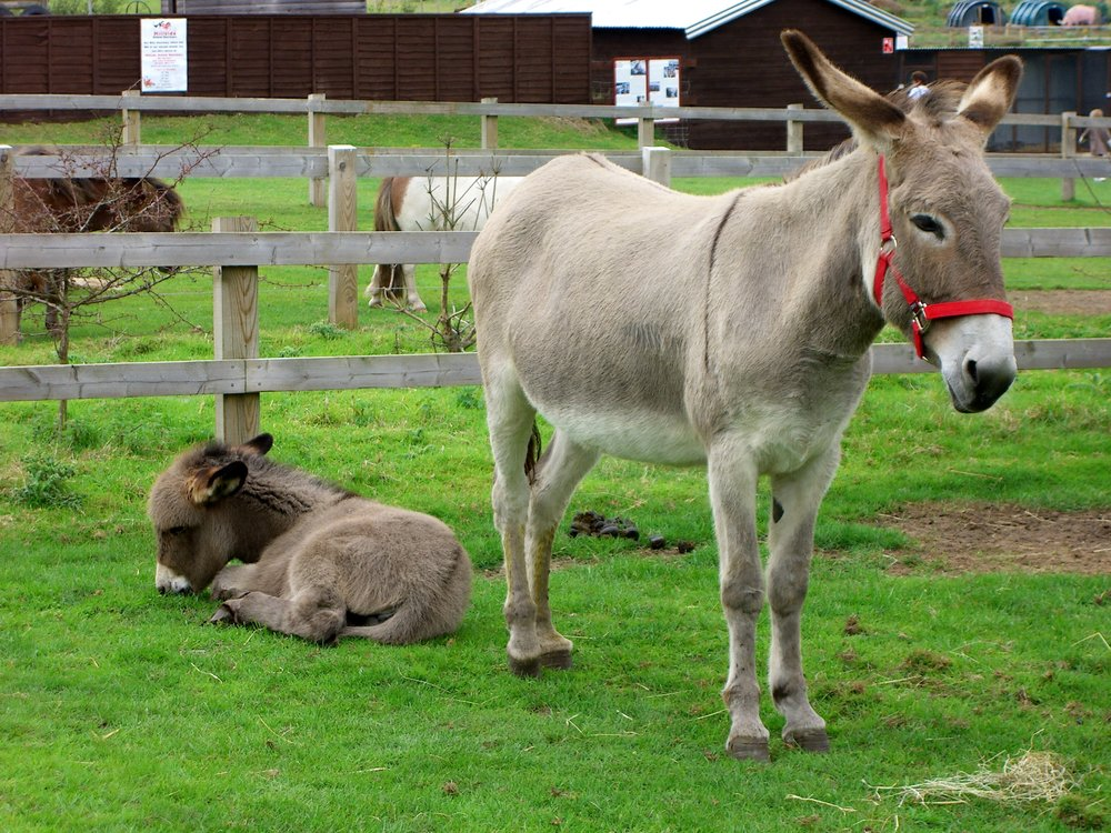 Equine Science and Equestrian Studies don't just learn about horses and ponies, they also get experience with donkeys and/or mules, zebras, and more.