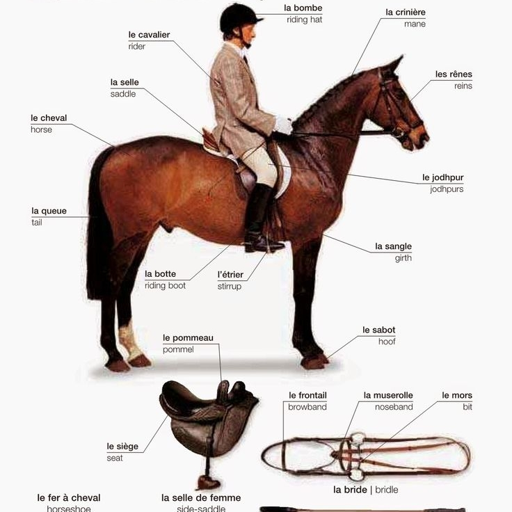 """3.Equestrian Themes in Academic Subjects   All subjects and courses have some equestrian themed activities. For example, the first French unit of the year is horse focused, and math includes Horse Lover's Math with word problems relating to horses (eg converting """"hands"""" to cm)."""